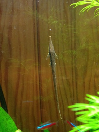 tried to photograph the fancy guppies (they are SO FANCY!) but they ...